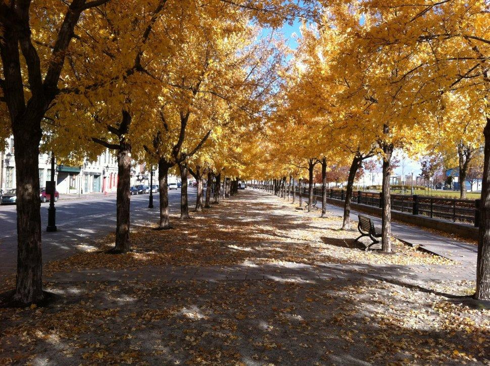Blog Pic - Montreal-22